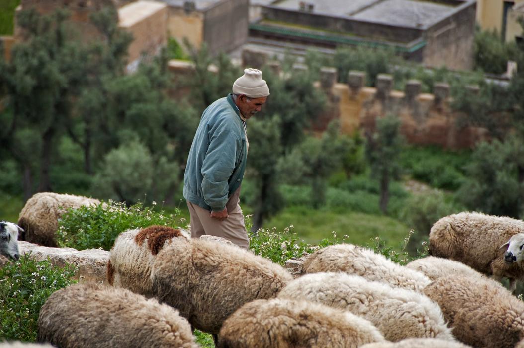 4juancarlosgarcialorenzo-photography-flickr-morocco-fez-shepherd