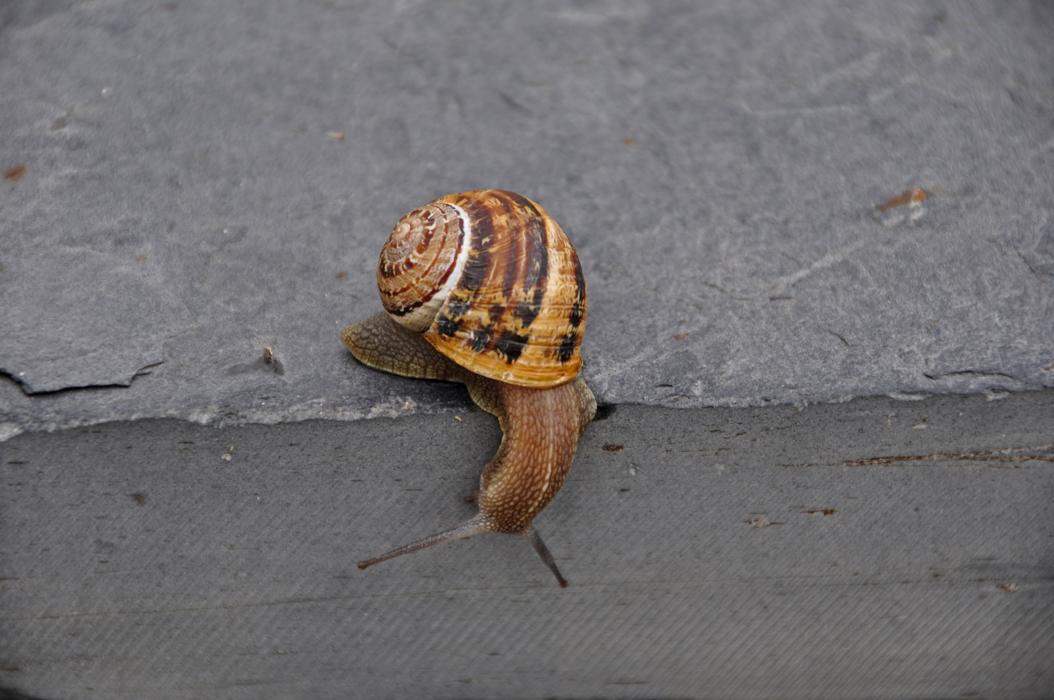 Lugo. Barreiros. Following the Cliff Path. Snail