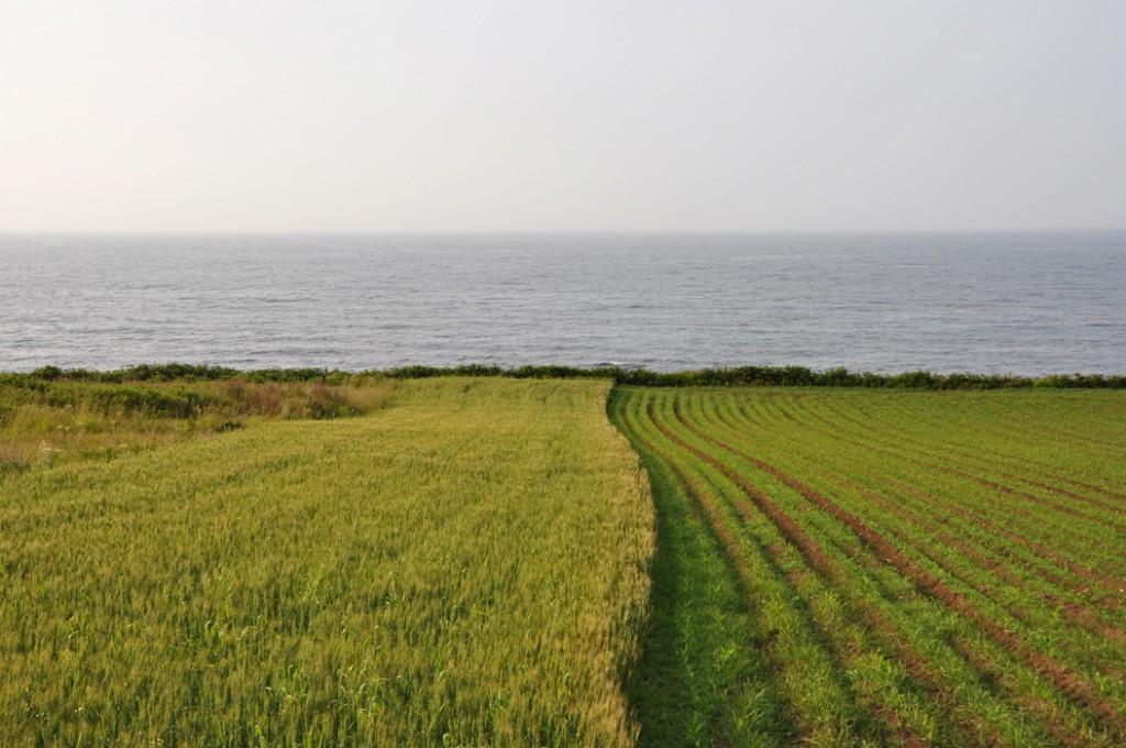 A Coruña. Caión DSC_0243 P